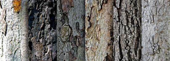 Tree Bark Title Header