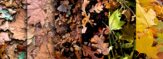 Fall Leaves Title Header