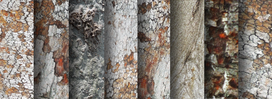 Tree Trunk Texture Set
